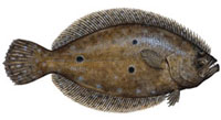 Flounder Fishing Tips - How To Catch Flounder